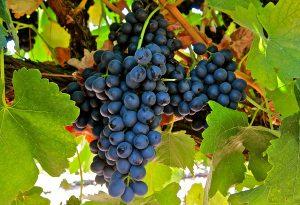 ruou-vang-nhap-khau-tu-uc-lane-vineyard-19th-meeting-cabernet-sauvignon-2012